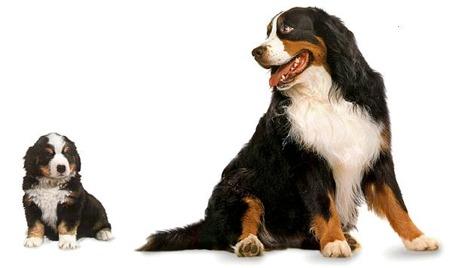Top 10 Towarzysz Duży Pies Luxlux